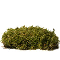 Meaning Of Moss What Do Moss Plants Mean