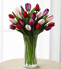 Premium Tender Tulips Bouquet