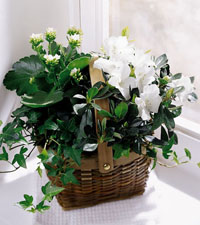 FTD's White Assortment Basket