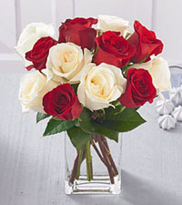 One Dozen Favourite Red & White Vased Roses