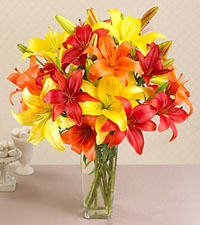 California Sunshine Mixed Asiatic Lilies