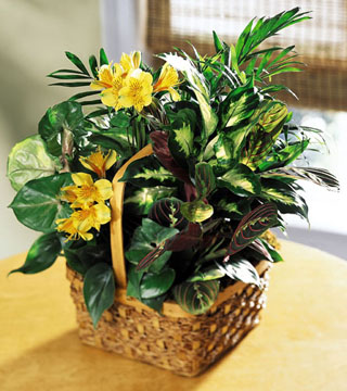 FTD's Bit of Sunshine Basket
