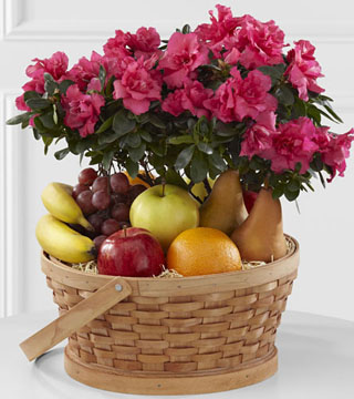 Encircling Grace Fruit & Plant Basket