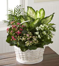 Rural Beauty Planter Basket