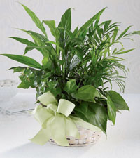 FTD's Woodland Greens Basket