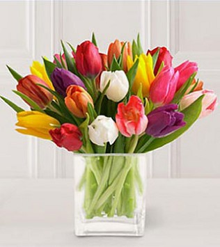 20 Stem Mixed Tulips